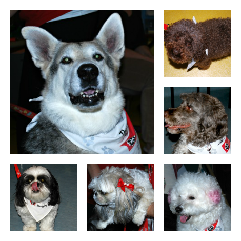 Some of the Therapy Dogs!