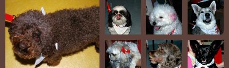 The St. John Ambulance Therapy Dog Program