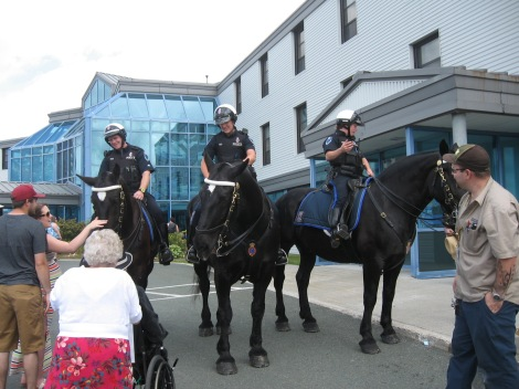 The Royal Newfoundland Constabulary horses pay a visit