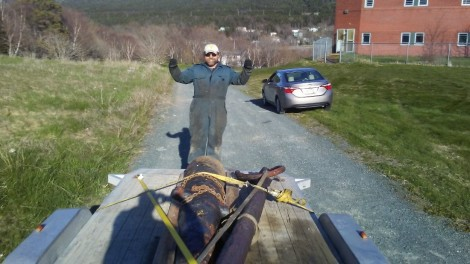 Success! Patrick Monsigneur of the St. Mary's Battery Restoration Committee oversees the cannon being secured on a flatbed truck at the Waterford Hospital.